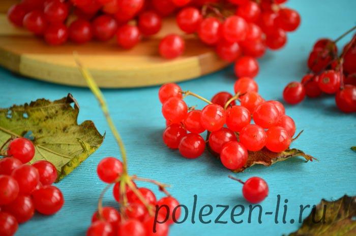 Фото ягоды калины свежей