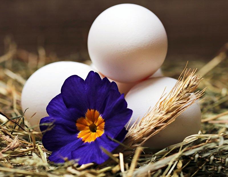 Фото яиц куриных