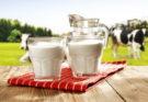 молоко коровы