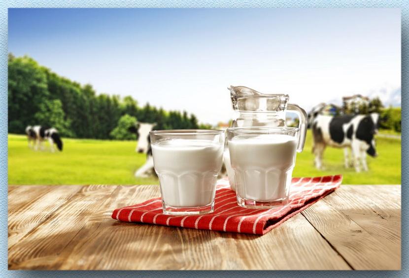 молоко коровы луг
