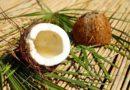 Фото кокоса в разрезе